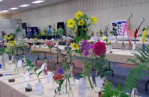 Horticulture Entries at the Lexington Lions Club Blue Grass Fair Flower Show