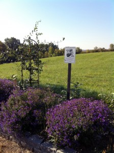 Millersburg Garden Club's Monarch Waystation