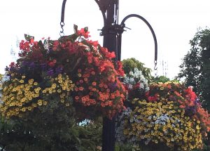 Hanging Flower Baskets by Glasgow GC