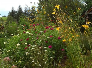Plant an assortment of annuals and perennials