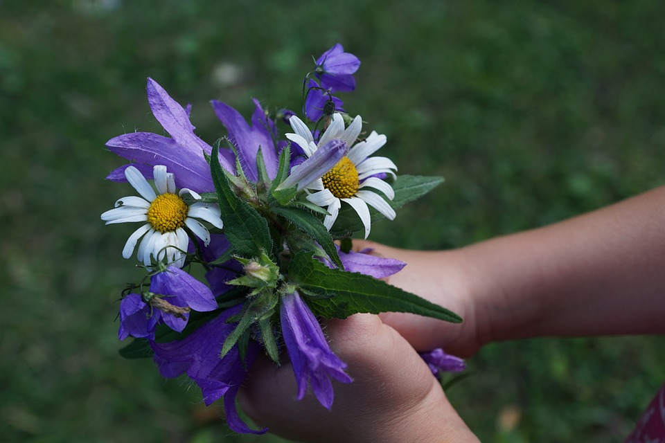 child's hands holding purple and white flowers