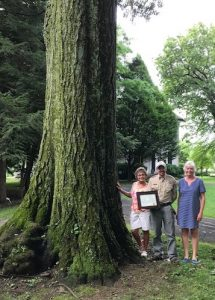 Champion Red Oak Awarded to GCKY