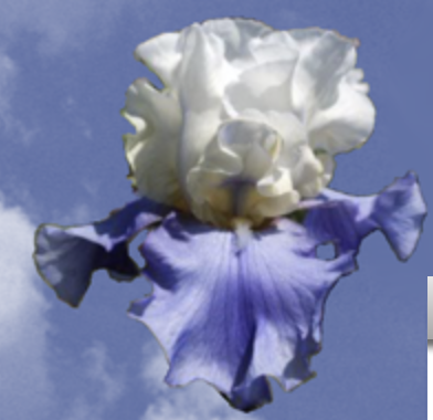 Bluegrass Iris Society Show - CANCELED